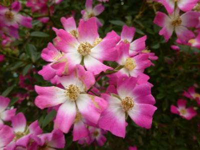 ガーデン花⑨-2