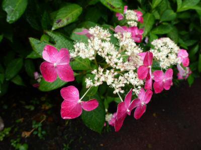 ⑪花まつり 6・16