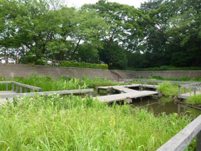水生植物園 6・24