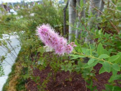 もこもこの木の花 9・5