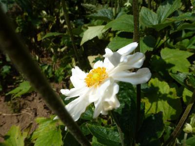 ガーデン花④ 9・9
