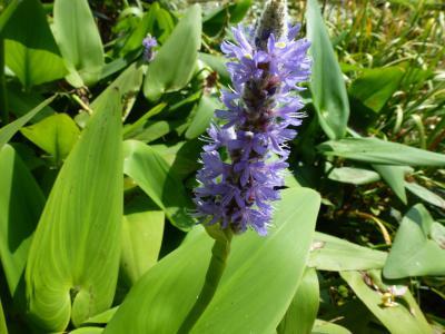 ガーデン花① 9・9