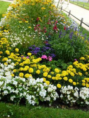 ドレスデン 噴水広場の花② 7・27