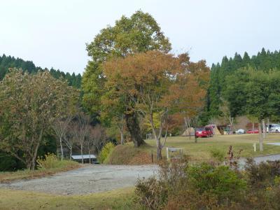 歌瀬キャンプ場② 11・4