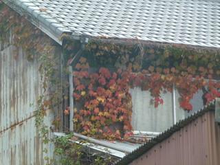 秋らしく 11・17