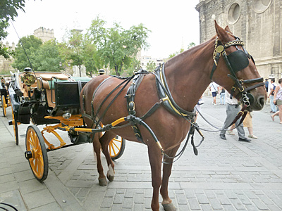 http://blog-imgs-53.fc2.com/e/m/i/emimholidays/horse_catedral_sevilla.jpg