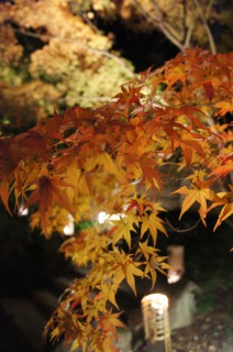 紅葉も色づいて・・