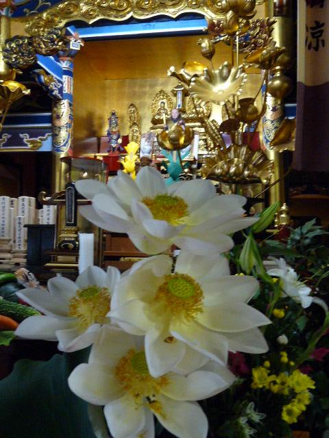 御宝前の蓮の華
