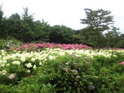 fc2blog_201206210819304e0.jpg