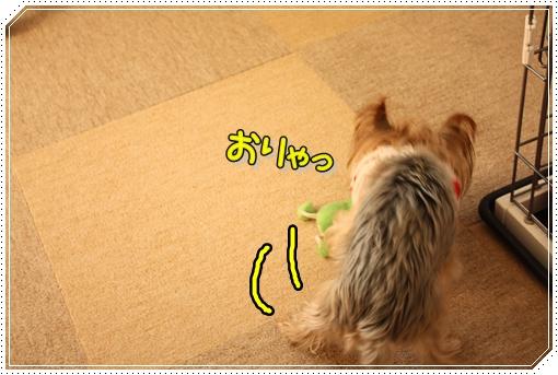 IMG_0003_20120802205748.jpg