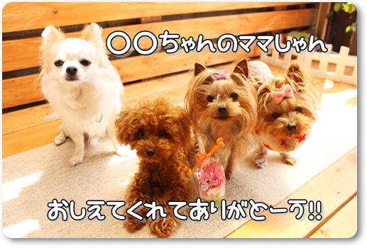 IMG_0026_20120516144527.jpg