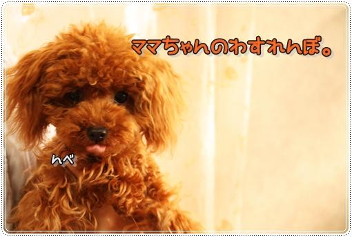 IMG_0061_20120723120926.jpg