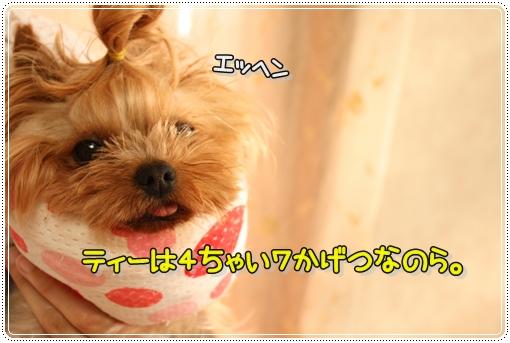 IMG_0064_20120723120925.jpg