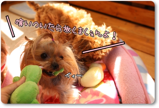 IMG_0072_20120428110236.jpg
