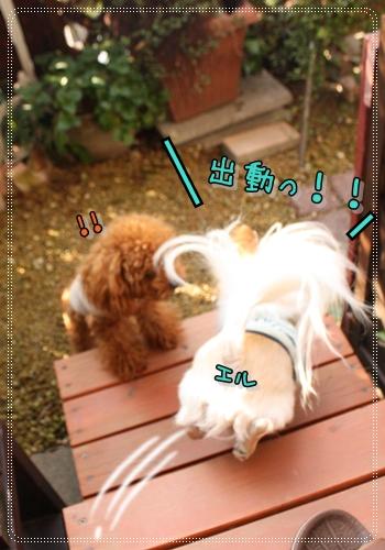 IMG_0092_20121208215253.jpg