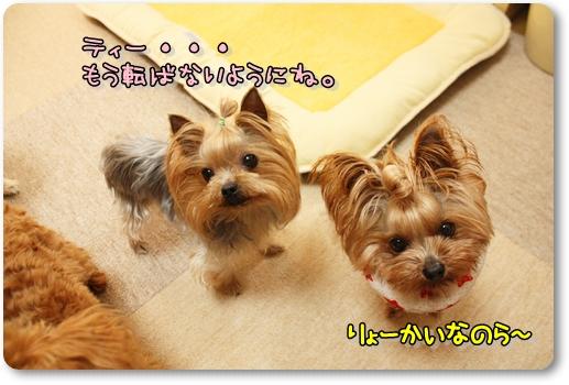 IMG_0112_20120601232244.jpg