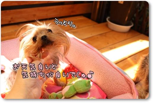 IMG_0118_20120427134233.jpg