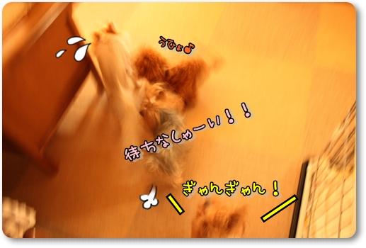 IMG_0166_20120609141752.jpg