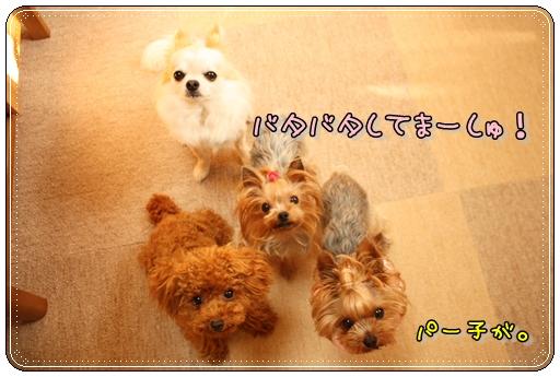 IMG_0176_20120710234829.jpg