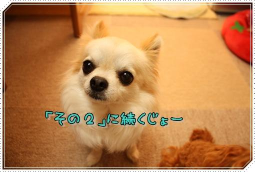 IMG_0280_20120812173246.jpg