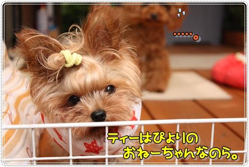 IMG_0292_20120904113214.jpg