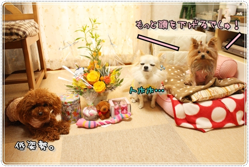 IMG_0296_20121205201407.jpg