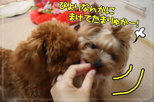 IMG_0311_20120712125126.jpg