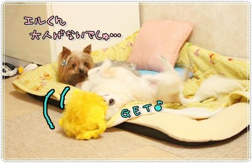 IMG_0312_20120906101341.jpg