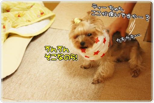 IMG_0317_20120906101341.jpg