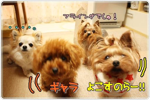 IMG_0360_20120706210831.jpg