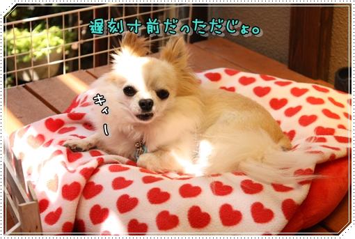 IMG_0512_20120913220551.jpg