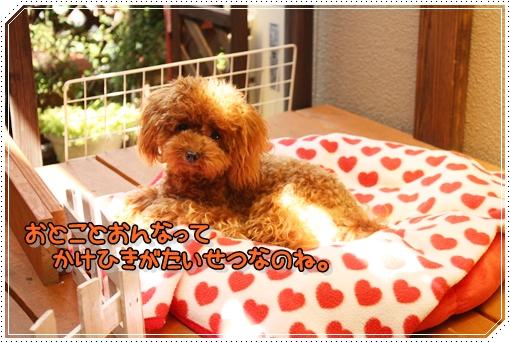 IMG_0529_20120911114955.jpg