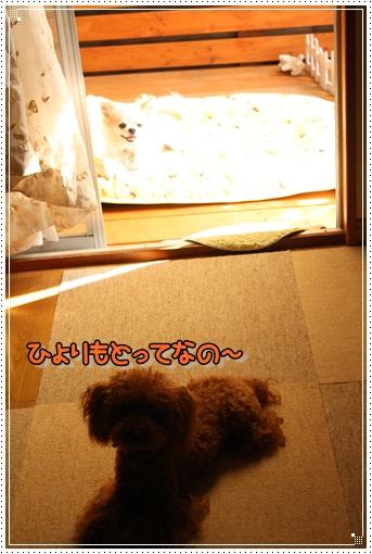 IMG_0598_20120916205129.jpg