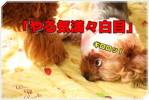 IMG_0629.jpg