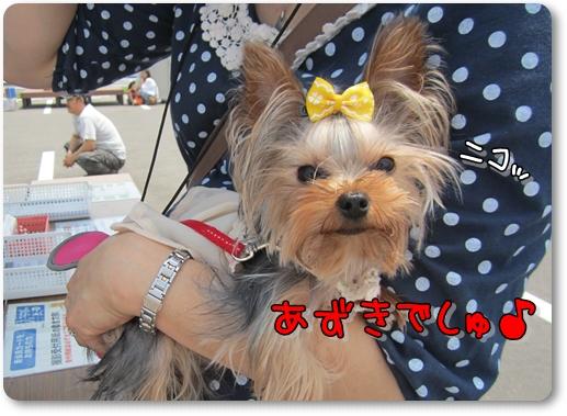 IMG_3328_20120618114320.jpg