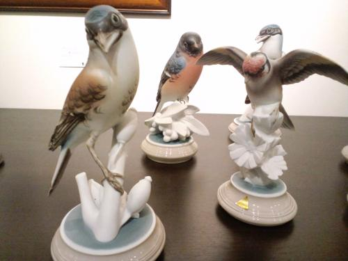 ロイヤルデュクス鳥