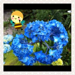 120603縺ゅ§縺輔>__convert_20120604093518