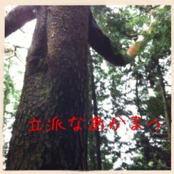遶区エセ縺ェ縺ゅ°縺セ縺、__convert_20120611113619