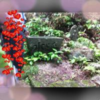 豌エ豬Ю_convert_20120611113153