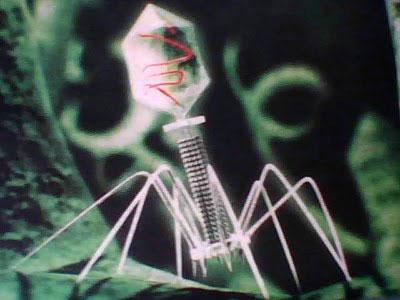 バクテリオファージ