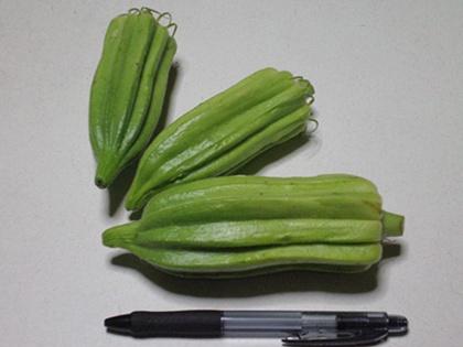 収穫オクラ 比較