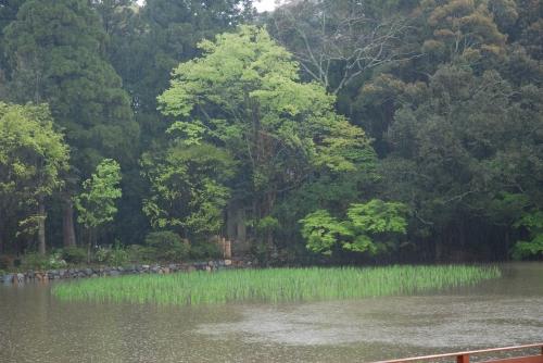 20120702 雨音の静けさ