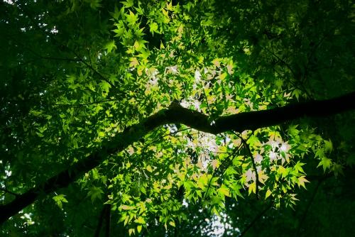 20120702 木の葉の歌