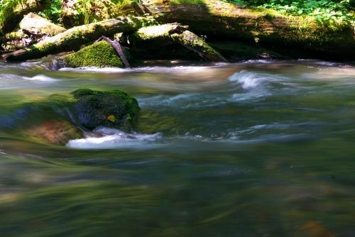 20120922 奥入瀬渓流1