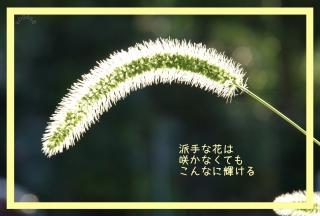 20120513 輝き.jpg