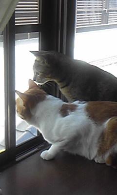 窓の外を眺める2匹