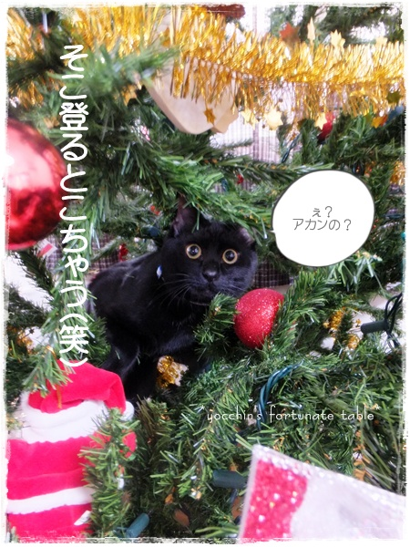 *愛猫クロロクリスマスツリーに登るの巻*