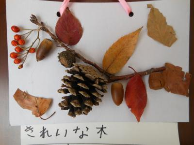2012 12 19 mきれいな木