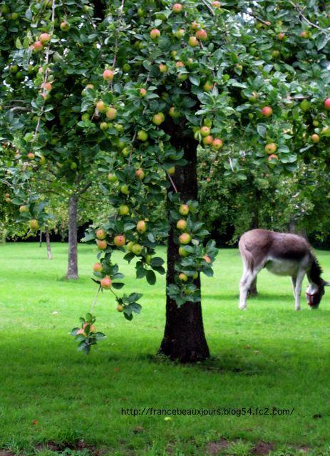 リンゴとロバ