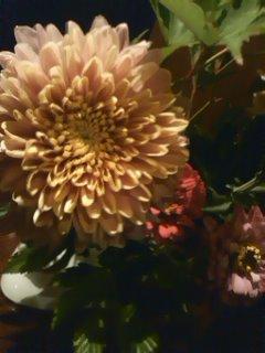 菊と百日草